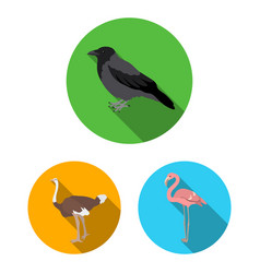 Types of birds flat icons in set collection for vector