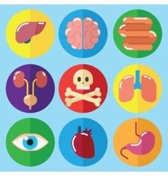 Anatomy Medical Care Health vector image