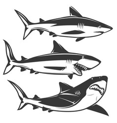 set of shark icons isolated on white background vector image