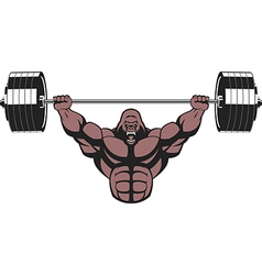 Ferocious gorilla with a barbell vector