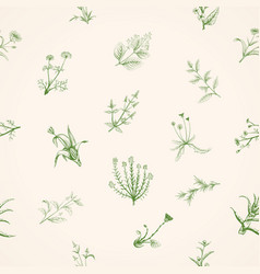hand drawn sketch medicinal plants vector image
