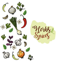 Herbs and spices plants and organ food background vector