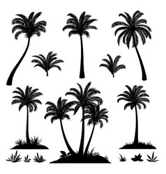 Palm trees and plants silhouettes vector