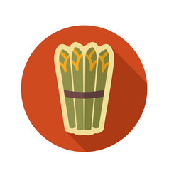 asparagus flat icon vegetable vector image