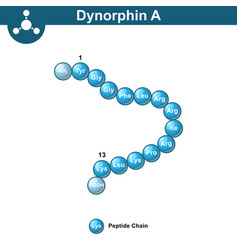 dynorphin a abstract model amino acid sequence vector image vector image