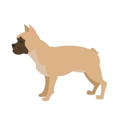 French bulldog design flat vector image vector image