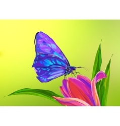 The cute colored butterfly on the flower vector image