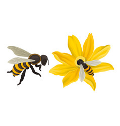 Bee flying around the flower and gathering blossom vector