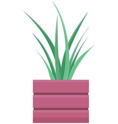 Decorative indoor evergreen plant in long narrow vector