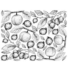 Hand drawn background of apricote and european net vector