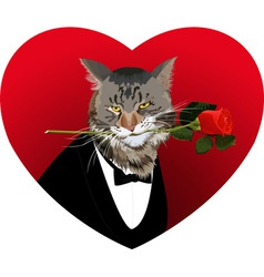 Heart shape cat and red rose vector image