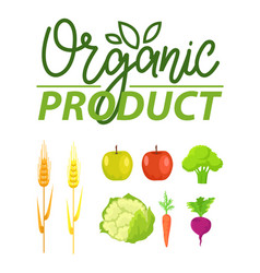 organic product wheat and broccoli carrots set vector image