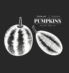 Pumpkin set hand drawn vegetable on chalk board vector
