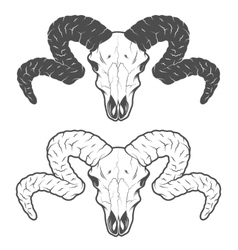 Skull of a sheep The two versions vector