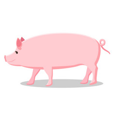 pink pig with curly tail isolated vector image