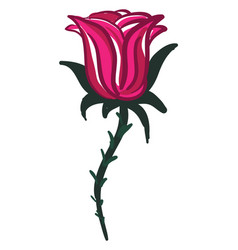 a red rose branch or color vector image
