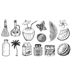 coconut and palm leaf milk packaging glass vector image