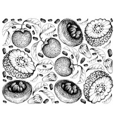 Hand drawn background of australian black sapote a vector