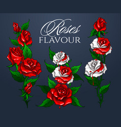 roses flavour bouquet vector image