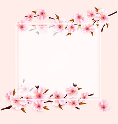 spring nature background with sakura japan cherry vector image