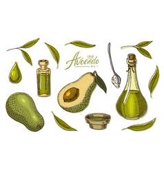 tropical avocado set of evergreen fruit plant vector image