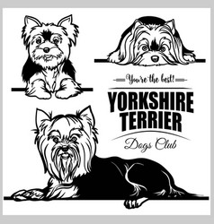 Yorkshire terrier - set isolated vector