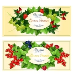 Healthy fruits and berries banners set vector image vector image