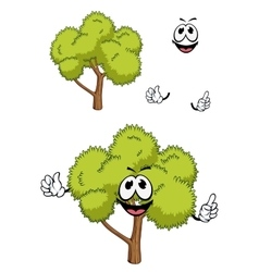 Cartoon tree with green foliage vector image vector image