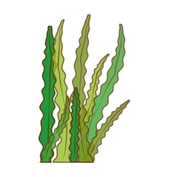 Algae or seaweed icon image vector
