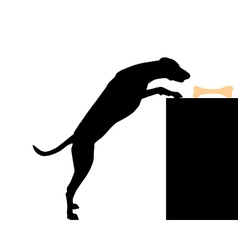 Dog steals bone vector image vector image