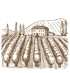 italian vineyards drawn stroke black and white vector image