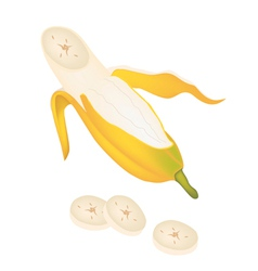 Open Ripe Cultivated Banana on White Background vector