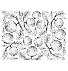 hand drawn background of fresh apricote fruits vector image