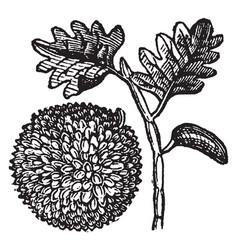 Breadfruit vintage vector