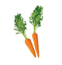 Carrot ripe vegetable vector