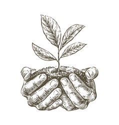 Hands holding handful earth with growing plant vector