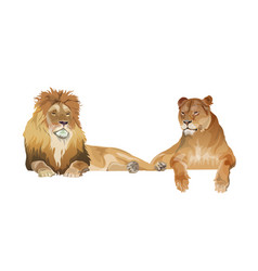 Lion and lioness lying together realistic vector