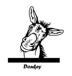 peeking funny donkey - funny donkey out vector image