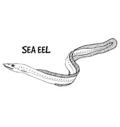 Sea eel in lines on white background vector