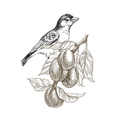 sparrow bird hand drawn in vintage style with vector image