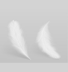 Birds white feathers isolated vector
