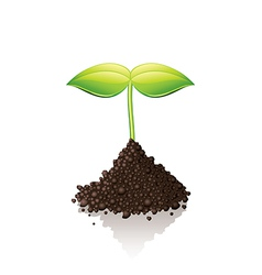 Growing sprout vector