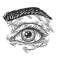 Human eye and eyebrow sketch scratch board vector