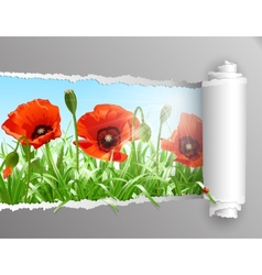 Red poppies in grass with ripped paper vector image