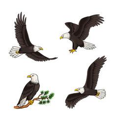 Set bald eagles vector