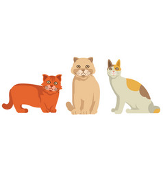 three little cats in vector image