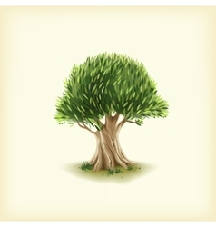 Color of the olive tree vector