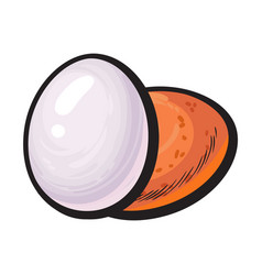 whole hard boiled peeled and unpeeled chicken egg vector image