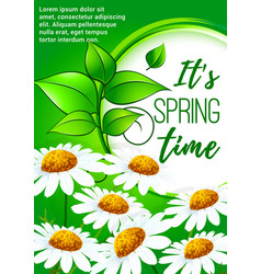 spring poster design with daisy flowers vector image vector image
