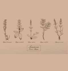 hand drawn collection of herbs vector image vector image